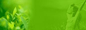 Woman in flowers green